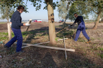 25. graven-en-bomen-verzorgen-11-10-12-107