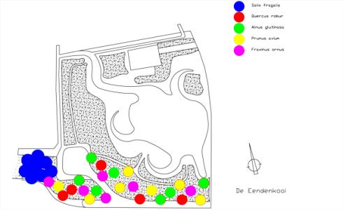 Eendenkooi-beplantingsplan-fase-1
