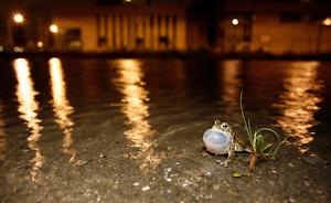rugstreeppad-©-Elken-Ecology